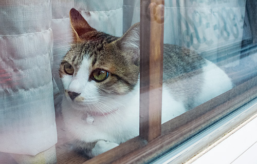外から見ると、こんな感じのモカ