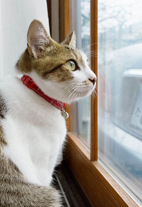 外を見つめるモカ